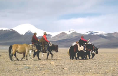Tibet's Nomads Riding Towards A Planned Extinction
