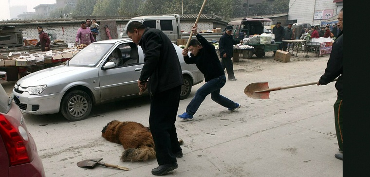 Tibet Dogs Being KIlled
