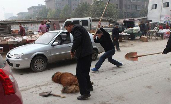 Chinese citizens and local officials clubbing a Tibetan mastiff