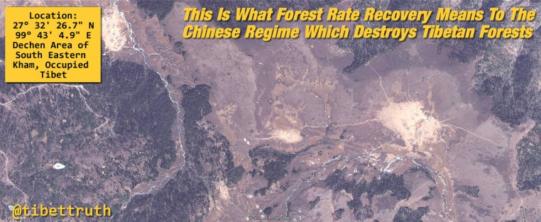Forest Coverage In Tibet Being Destroyed