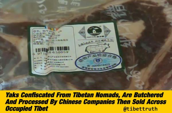 China Stealing Tibet's Yaks And Sells Products Back To Tibetans For Big Profits