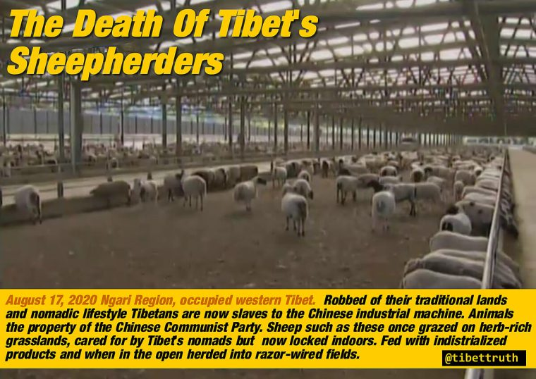 The Death Of Tibet's Sheepherders
